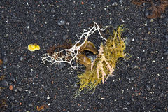 Bella struttura con la flora del mare Fotografia Stock Libera da Diritti