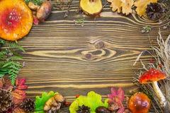 Bella struttura dei materiali naturali, funghi, coni, foglie di autunno, agarichi di mosca, bacche immagini stock libere da diritti