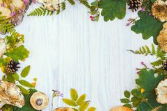 Bella struttura dei materiali naturali, fungo, coni, felce, bacche Fondo di legno bianco di autunno fotografia stock