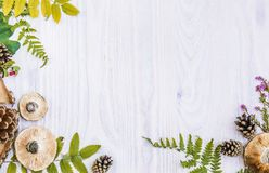 Bella struttura dei materiali naturali, fungo, coni, felce, bacche Fondo di legno bianco di autunno fotografia stock libera da diritti