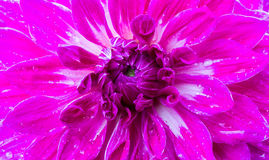 Bella struttura del fiore Immagini Stock