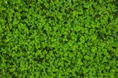 Bella struttura dell'erba verde immagine stock