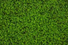 Bella struttura dell'erba verde fotografie stock