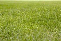 Bella struttura dell'erba verde Fotografia Stock