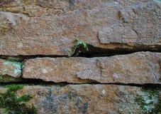 Bella struttura di una pietra dell'alta risoluzione fotografie stock