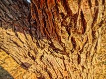 Bella struttura dorata della corteccia Fotografie Stock Libere da Diritti
