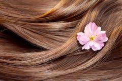 Bella struttura lucida dei capelli con un fiore Fotografie Stock Libere da Diritti