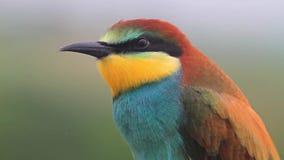 Bella testa colorata selvaggia di tornitura dell'uccello archivi video