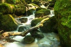 Bella torrente montano con Moss Covered Stones Fotografie Stock Libere da Diritti