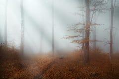 Bella traccia in foresta nebbiosa Immagini Stock Libere da Diritti