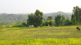 Bella valle Immagine Stock