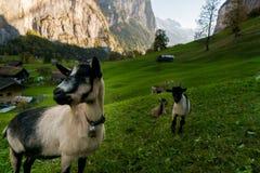 Bella valle alpina di Lauterbrunnen del paesaggio, Svizzera, autunno fotografie stock libere da diritti