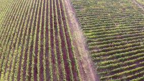 Bella valle con le vigne, vista aerea della montagna archivi video