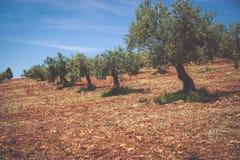 Bella valle con vecchi di olivo a Granada, Spagna Immagini Stock