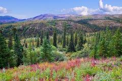 Bella valle nella sosta nazionale di Denali Immagine Stock