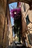 Bella vecchia via a Firenze con fiori enormi sulla parete immagine stock