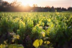 Bella vigna scenica in Francia fotografie stock libere da diritti