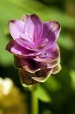 Bella Violet Little Flower nel giardino Fotografie Stock