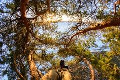 Bella vista attraverso i rami del pino il giorno soleggiato Fotografia Stock Libera da Diritti