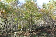 Bella vista degli alberi di stagione di autunno Immagini Stock