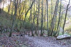 Bella vista degli alberi di stagione di autunno della foresta della valle Immagine Stock