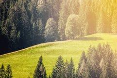 Bella vista dei prati alpini con una mucca di pascolo un giorno soleggiato Fotografia Stock