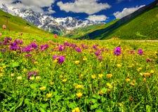 Bella vista dei prati alpini nelle montagne di Caucaso Fotografia Stock Libera da Diritti