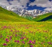 Bella vista dei prati alpini nelle montagne di Caucaso Fotografia Stock