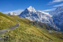 Bella vista dei prati dell'erba verde con le alte montagne della neve i Fotografia Stock