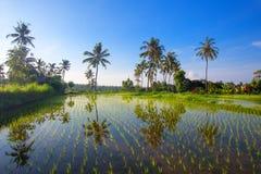 Bella vista dei terrazzi del riso di Bali Fotografia Stock Libera da Diritti