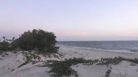 Bella vista del cespuglio sulla spiaggia sabbiosa con il mare sull'orizzonte video d archivio