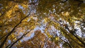Bella vista del cielo di Autumn Colorful Trees And Blue immagine stock