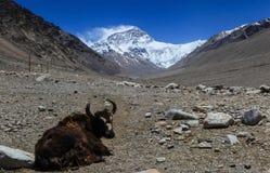 Bella vista del fronte del nord della montagna di Everest nel Tibet Fotografia Stock