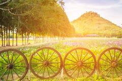 Bella vista del giacimento rosa dell'universo con la ruota di legno Fotografia Stock