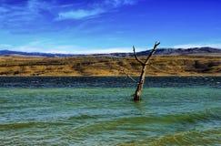 Bella vista del lago con l'albero nel mezzo Fotografia Stock Libera da Diritti