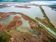 Bella vista del lago invaso con le canne Immagine Stock Libera da Diritti