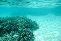 Bella vista del mondo subacqueo Le barriere coralline morte grige, moltiplicano i pesci, la sabbia bianca e l'acqua del turchese  Fotografie Stock Libere da Diritti