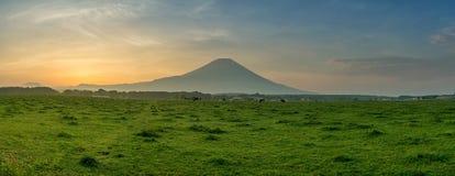 Bella vista del monte Fuji e del campo Immagine Stock