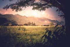 Bella vista del paesaggio del campo o del prato verde di mattina con il fondo di luce solare Immagini Stock