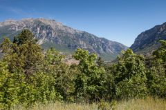 Bella vista del paesaggio del canyon di Provo con il cielo blu-chiaro e degli alberi vibranti delle piante verdi nella parte ante Fotografia Stock
