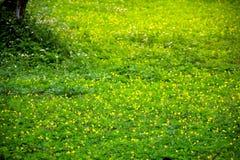 Bella vista del paesaggio il colore del fondo verde del campo di mattina che ritiene fresco Fotografie Stock