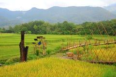 Bella vista del passaggio pedonale del bambù e della risaia Immagine Stock Libera da Diritti