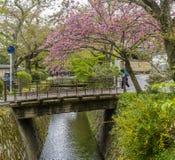 Bella vista del percorso famoso del ` s del filosofo di Kyoto, Giappone, in primavera stagione immagine stock libera da diritti