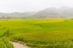 Bella vista del terrazzo del riso, cang chai, Vietnam della MU fotografie stock libere da diritti