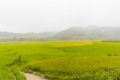 Bella vista del terrazzo del riso, cang chai, Vietnam della MU immagine stock