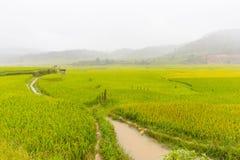 Bella vista del terrazzo del riso, cang chai, Vietnam della MU immagini stock