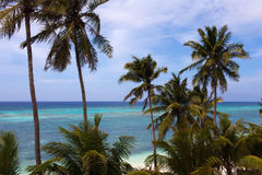 Bella vista del turchese del mare con le palme immagine stock libera da diritti