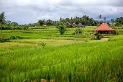 Bella vista della casa e del villaggio tradizionali nel terrazzo verde del riso a Bali, Indonesia Fotografia Stock