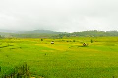 Bella vista della casa nel terrazzo del riso, cang chai, Vietnam della MU fotografia stock libera da diritti