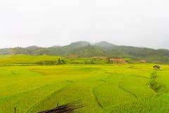 Bella vista della casa nel terrazzo del riso, cang chai, Vietnam della MU fotografie stock